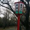 【豊橋市】花見おすすめスポットの向山公園に桜の様子を見に 大池公園・桜トンネル