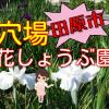 初立池公園の花しょうぶ園は穴場でおすすめ【田原市】