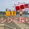 豊橋市の無料シジミ採りスポット!豊川の下地町側の情報
