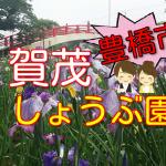 【豊橋市】賀茂しょうぶ園は今が見頃!花しょうぶまつり2017