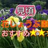 【田原市】今が見頃!初立池公園の花しょうぶ園はおすすめ!2017
