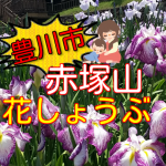 【豊川市】赤塚山公園の花しょうぶは今が見頃!2017