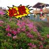 【豊川市】展望ツツジ園からの景色は最高!東三河ふるさと公園