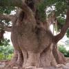 【蒲郡市】樹齢1000年以上!清田の大クスは観光におすすめ!場所と駐車場情報