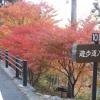 愛知の紅葉は大井平公園が穴場でおすすめ!今が見頃!2017紅葉スポット