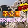 豊橋市の桜花見スポット!2018幸公園の見頃と開花状況!
