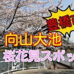 豊橋市の桜花見スポット!2018向山大池の見頃と開花状況!