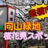 豊橋市の桜花見スポット!2018向山緑地の桜の見頃はいつ?今でしょ~!