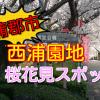 蒲郡市の桜花見スポット!西浦園地は桜と絶景を見る事ができる場所!