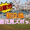 田原市の桜花見スポット!初立池公園は穴場的でファミリーにおすすめ!