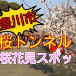 豊川市の桜花見スポット!2018諏訪桜トンネルの見頃と開花状況