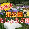 岡崎市東公園の花菖蒲まつり2018!開花状況や見頃などを紹介!ライトアップもあるよ!