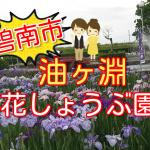 【碧南市】油ヶ渕の花しょうぶ祭り2018!開花状況や見頃・駐車場情報を紹介!